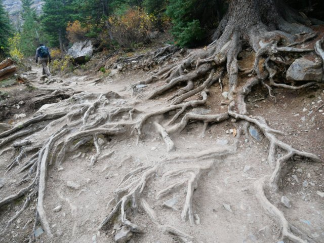 Path through the roots