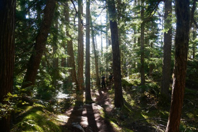 The forest on Al's Habrich ridge trail