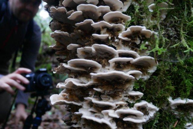 Marc and a mushroom