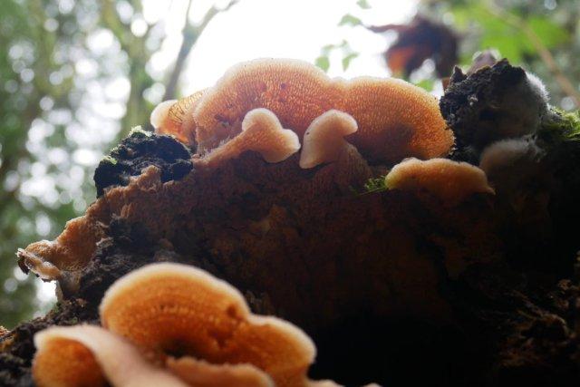 Looking up mushroom