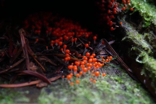 Orange mold (possibly)