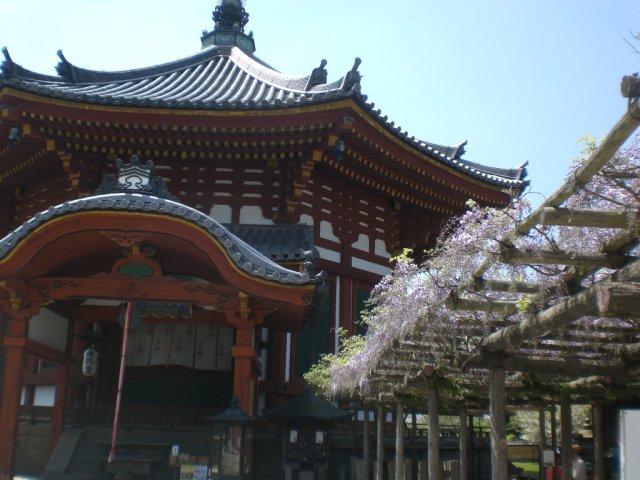 Kofukuji wisteria