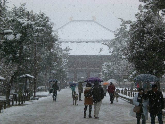 Todaiji in the snow