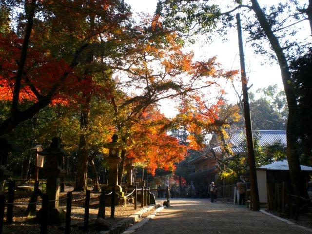 Path down from Kasuga Taisha