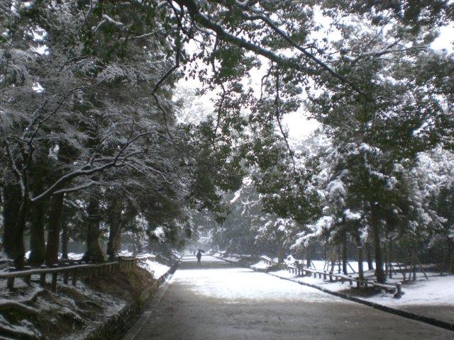 The road back from Kasuga taisha