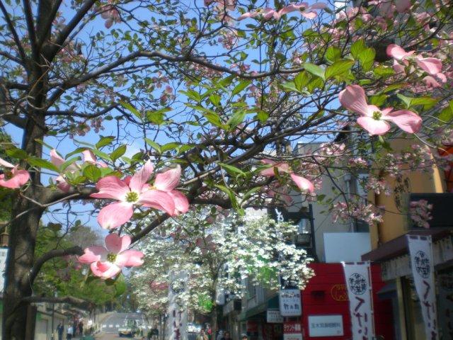 Flowers at edge of Nara machi