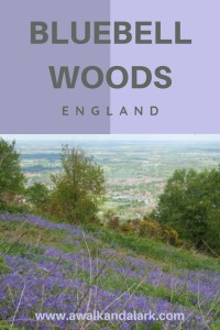 There are sooo many beautiful bluebell woods to explore and hike around in England. Here are a few of the prettiest for your travels in the UK.