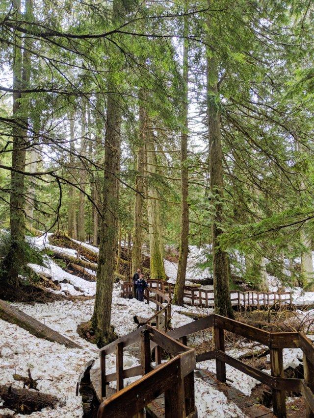 Giant Cedars Boardwalk Trail prettiness