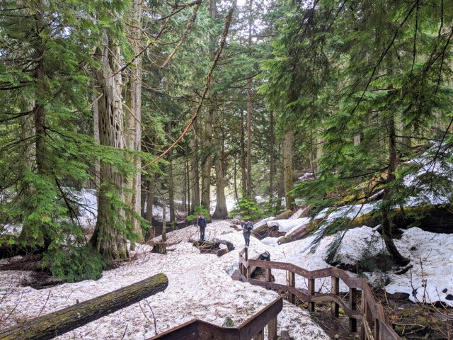 The trail zooms up steps into the wilderness