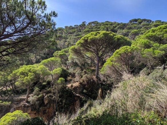 Gorgeous trees on the Costa Brava