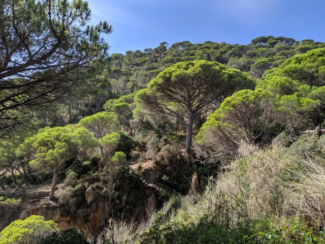 Gorgeous trees on the Costa Brava