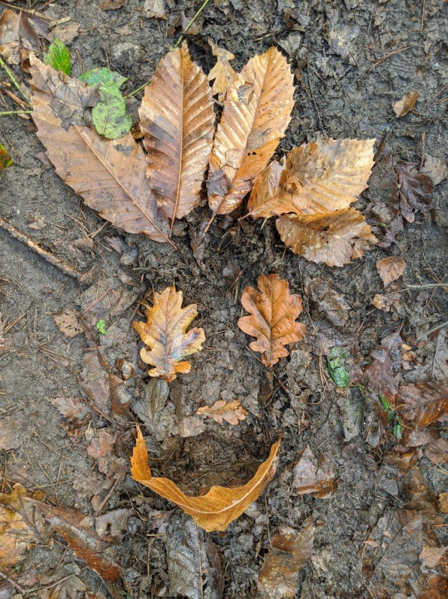 Faces in Sansom Wood with leaves