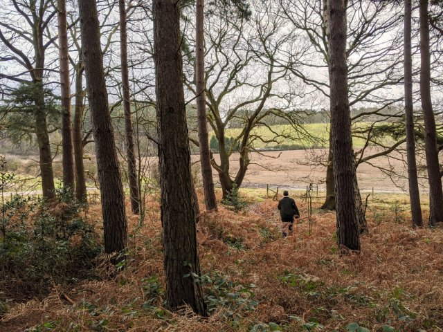 Edge of Sansom wood