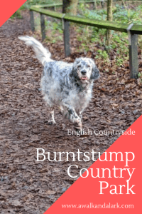 Burntstump Country Park - Great for Dog Walks near Nottingham