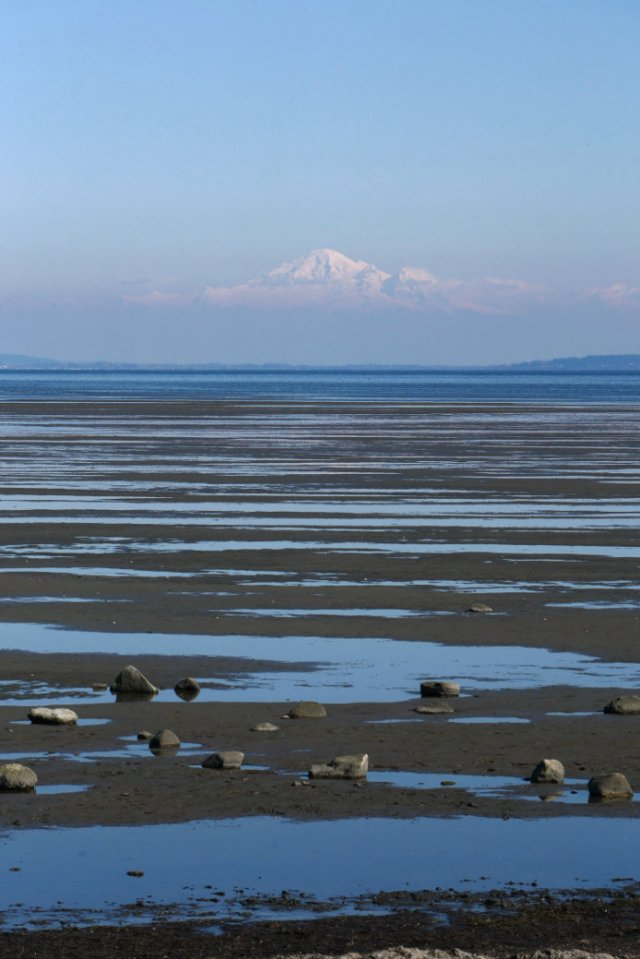 Mount Baker and sands Boundary Bay Dyke Trail