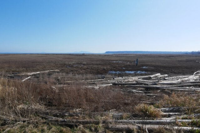 Looking back to the wetlands and Point Roberts