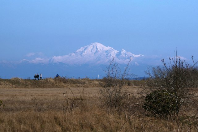 Mount Baker looking close from Boundary Bay