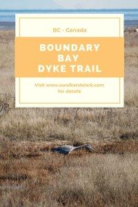 Boundary Bay Dyke Trail - fantastic for bird watching
