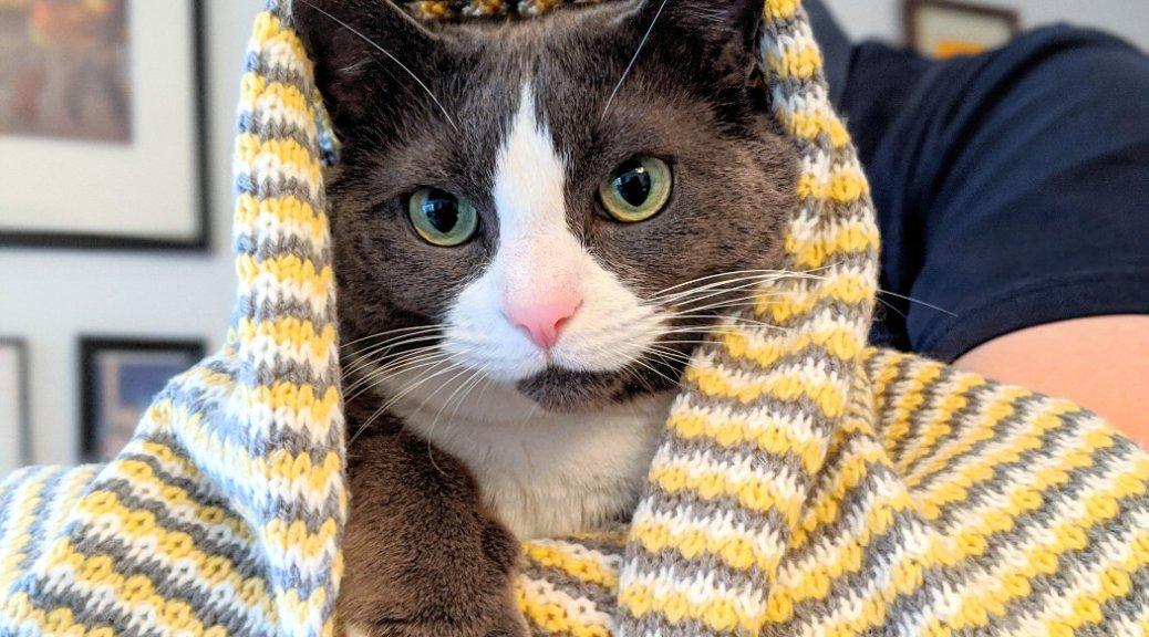 Monty in a blanket