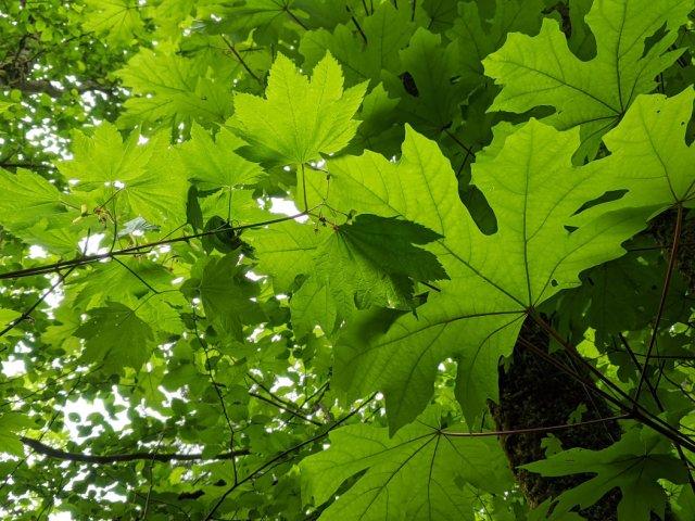 Gorgeous Green leaves in Belcarra Regional Park
