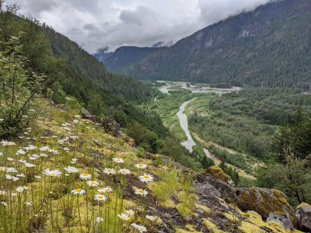 Daisies and Squamish Valley