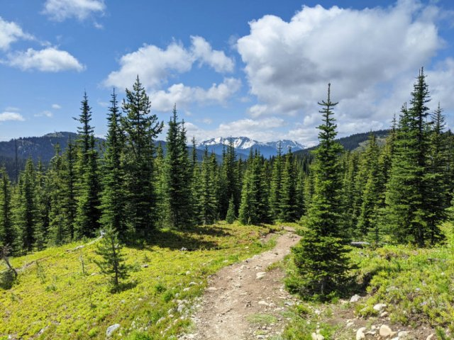 Hike through forest and meadows