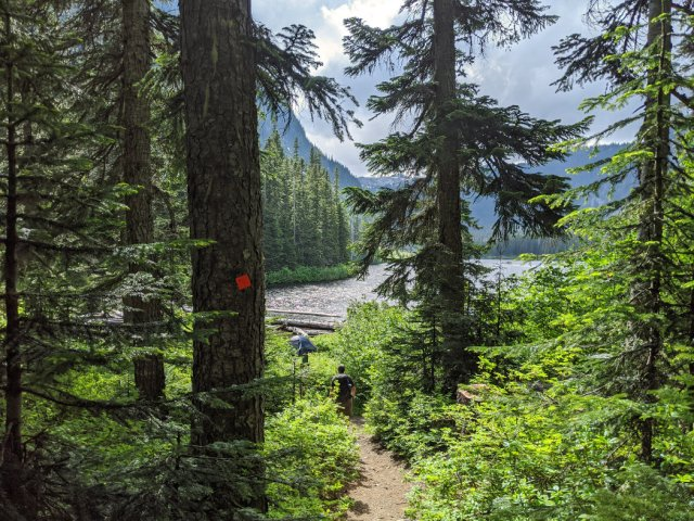 Falls Lake through the trees