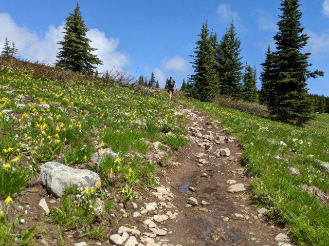 Glacier lily-filled trail