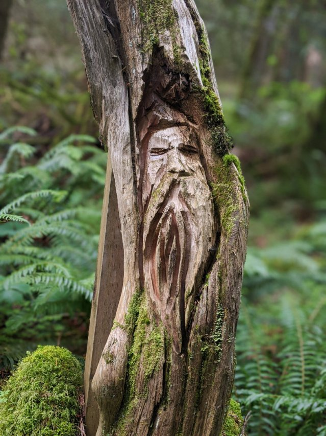 I found a portrait of my dad in the trees