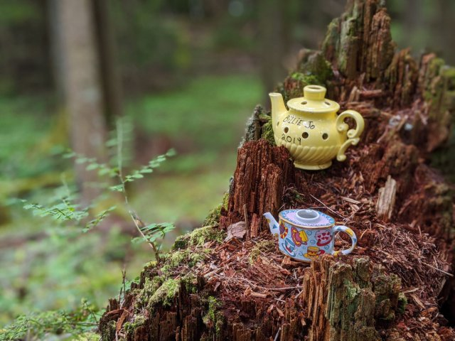 Teapots on a rotten stump again