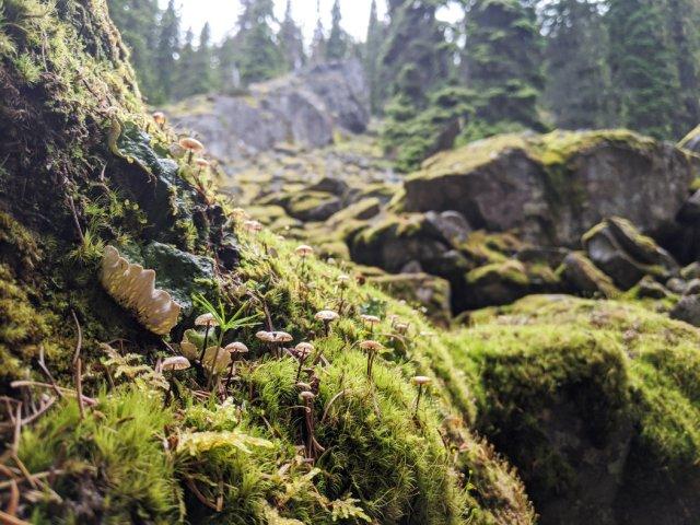 Teeny mushrooms on the three falls trail