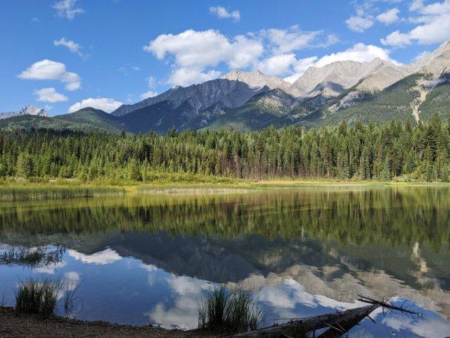 Dog Lake views