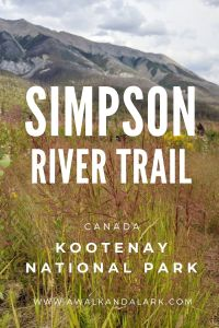 Simpson River Trail in Kootenay National Park, Canada - Mountains, grasses and recovering from wildfires