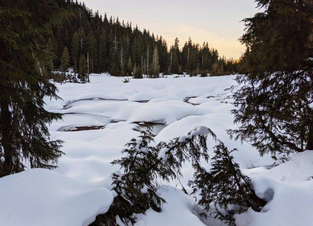 Marsh area near Yew Lake in pillowy snow