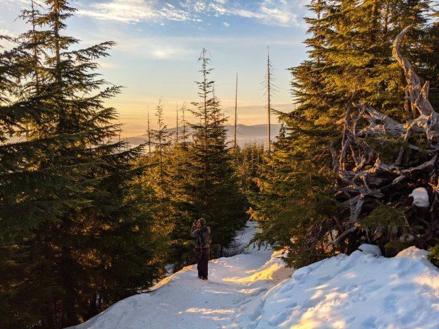 Sneaky views near Bowen Lookout trail