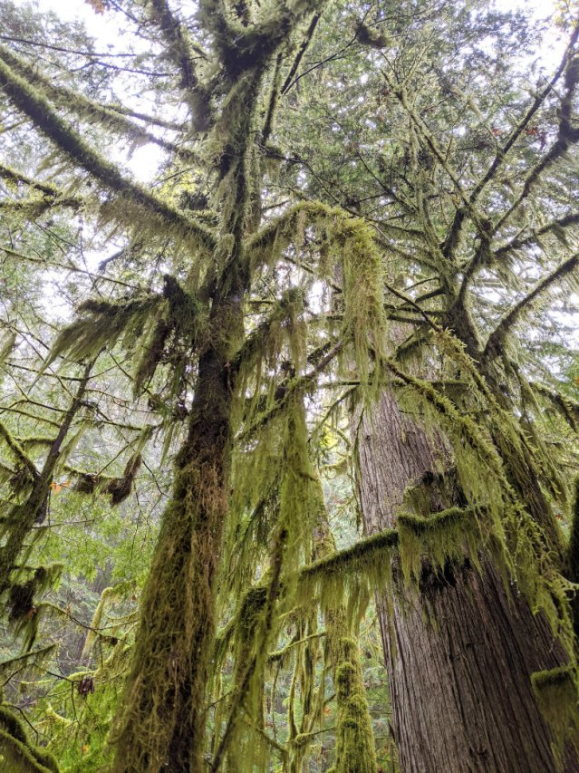Amazing moss hanging from the trees