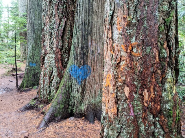Graffiti Trees