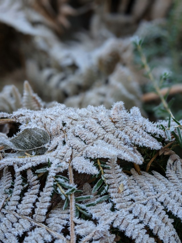Frosty ferns on bear mountain ice