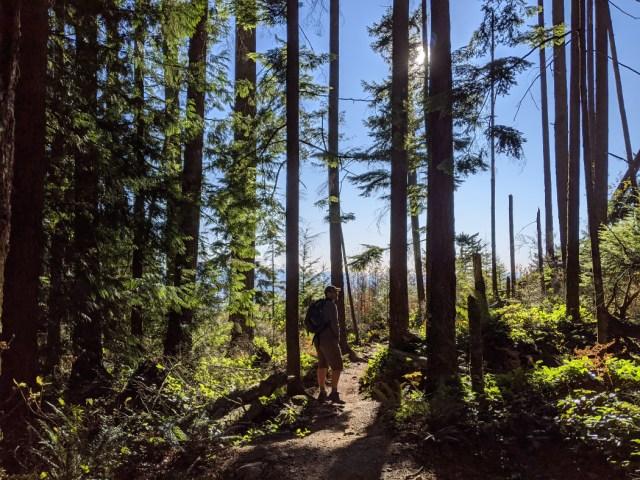 Views through the trees on Bear Mountain