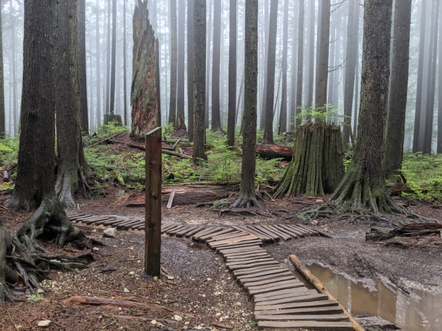 On to the Leopard trail on Mount Fromme