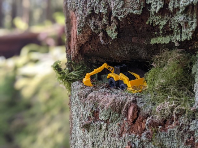 Watch out for a digger, hiding in a tree