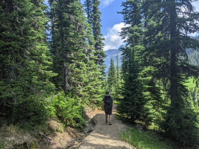 Forested trail to Singing Pass