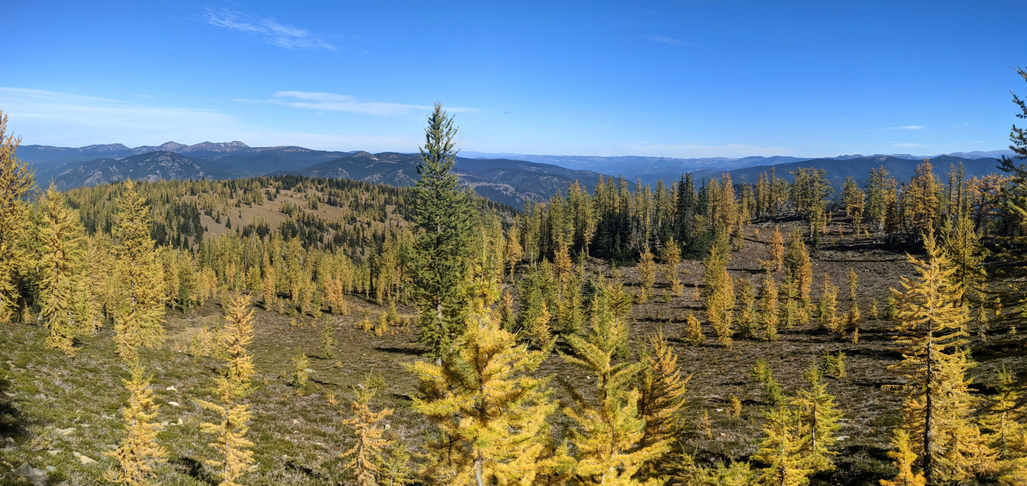 The incredible meadows full of golden larches in E.C. Manning Provincial Park