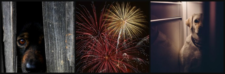 Calming tips for dogs during fireworks