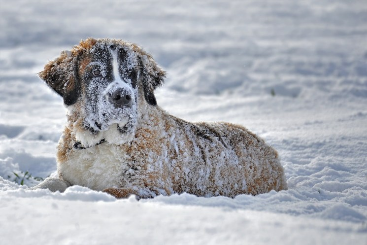 hypothermia and dog safety