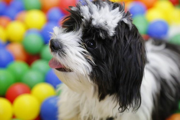 Is your Dog Suffering from Canine Cabin Fever?