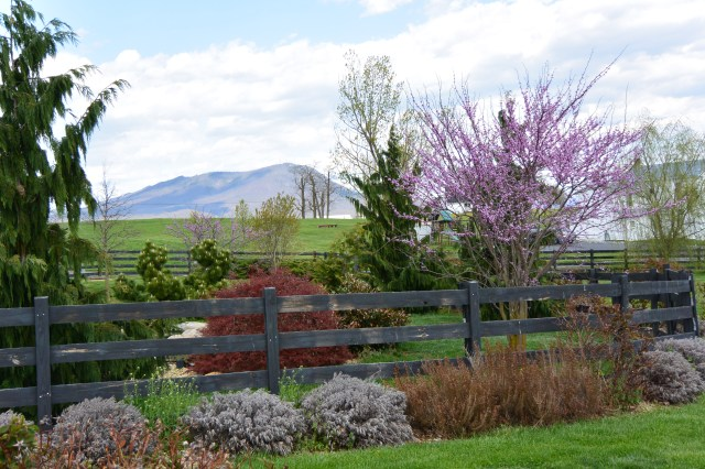 White Oak Lavender Farm | Harrisonburg, VA