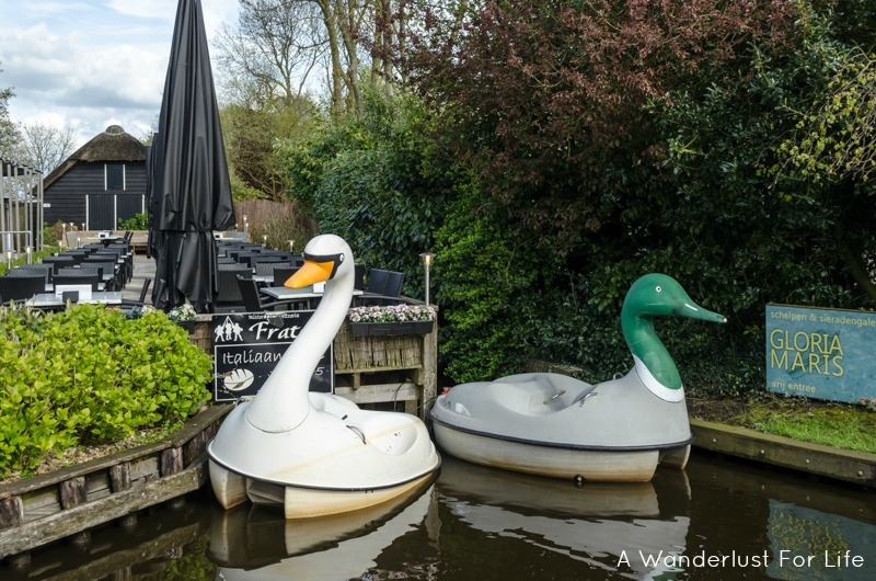Giethoorn Swans