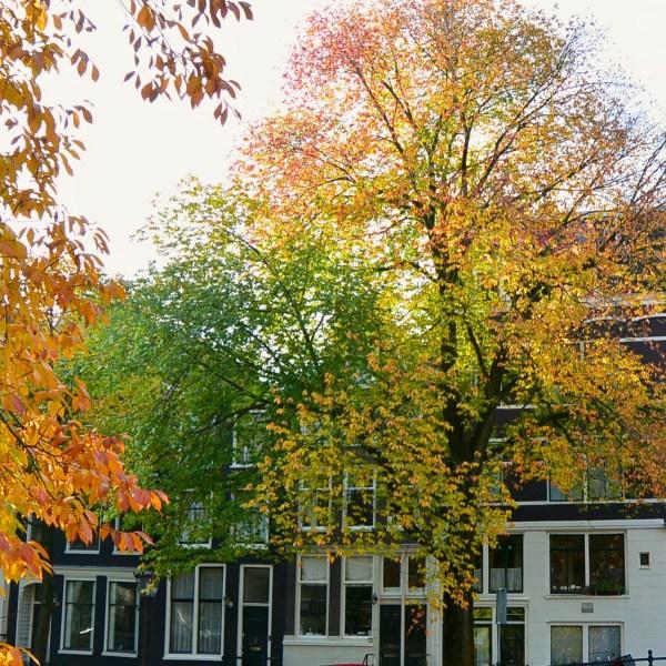 Beautiful Amsterdam autumn tree