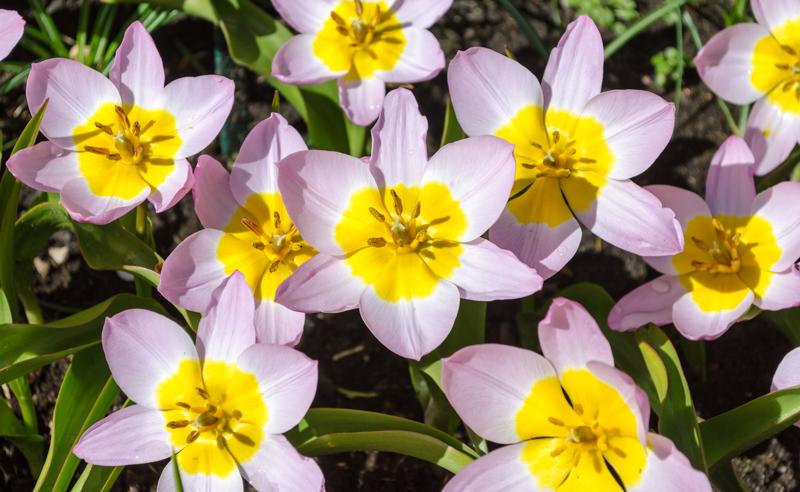 Bright flowers at Keukenhof